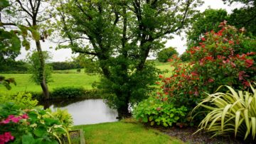 Essential Garden and Landscaping Tips